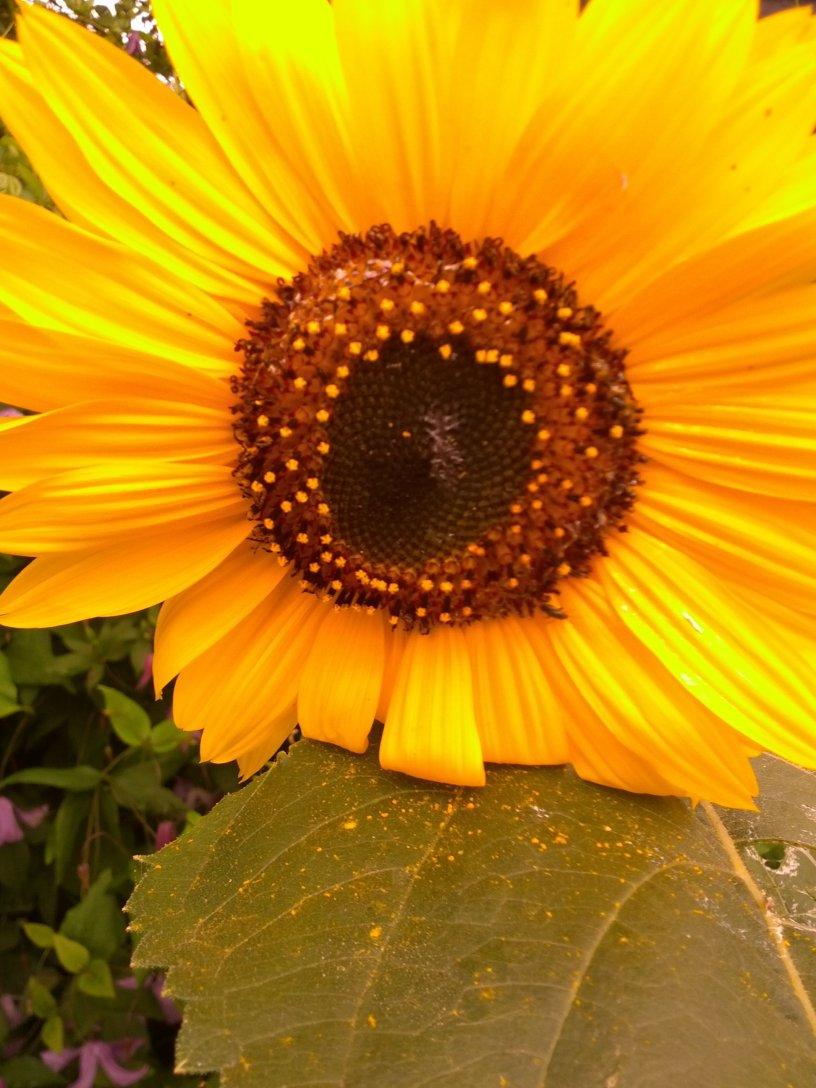 shyly spreading pollen