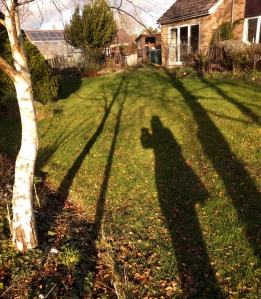 birch  shadows